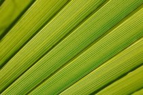 Close-up of green palm leave — Stock Photo