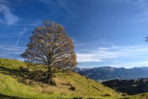 Germany, Bavaria, Allgaeu High Alps Nature reserve — Stockfoto
