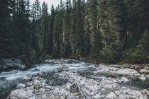 Canadá, Columbia Britânica, Columbia-Shuswap A, Glacier-Nationalpark, Illecillewaet River — Fotografia de Stock