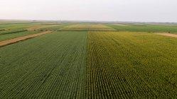 Сербія, Воєводина, повітряна думка кукурудзи, пшениці та сої полів наприкінці літнього дня — стокове фото