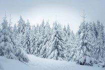 Germany, Hesse, Hochtaunuskreis, Feldberg, Winterlandscape with snow covered trees — Stock Photo