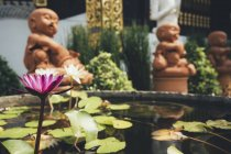 Thailand, Chiang Mai, Buddha statues and pond of water lilies in Wat Inthakhin Sadue Muang temple — Stock Photo