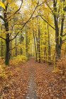 Германия, Рейнланд-Пфальц, Природный парк Палатинат-Форест осенью — стоковое фото