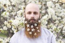 Портрет хипстера с белыми цветами дерева в бороде — стоковое фото
