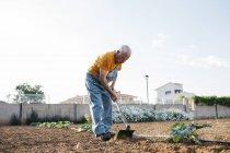 Uomo anziano in denim che lavora in generale su terreni agricoli ed estirpa terreno con zappa — Foto stock