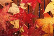 Wet red autumn leaves, Maple leaves on wooden surface, top view — Stock Photo