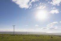 Royaume-Uni, Écosse, Caithness, Côte de Duncansby Head, moutons sur pâturage — Photo de stock