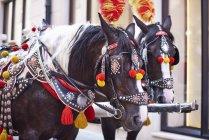 Poland, Krakow, dois cavalos decorados festivos — Fotografia de Stock