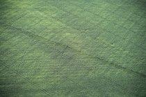 США, орошаемое земледелие в Восточном Колорадо — стоковое фото
