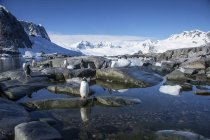 Antartico, penisola antartica, pinguini Gentoo, papua Pygoscelis — Foto stock