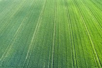 Германия, Рюссельберг, Ремс-Мурр-Рюссельбург, Вид с воздуха на зеленое поле — стоковое фото