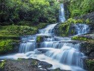 Новая Зеландия, Южный остров, водопад Маклин в Катлинсском лесопарке — стоковое фото