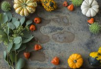 Décoration automnale, citrouilles ornementales — Photo de stock