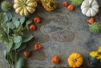 Autumnal decoration, ornamental pumpkins — Stock Photo
