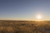 Botswana, Kalahari, Reserva Central de Caza de Kalahari , - foto de stock
