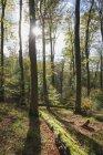 Alemania, Renania-Palatinado, Pfalz, Parque Natural del Bosque Palatinado en otoño - foto de stock