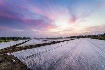 UK, Scotland, Fife, plastic covered field — Stock Photo