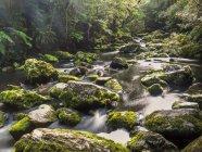 Новая Зеландия, Южный остров, река Итуруп в Катлинсском лесопарке — стоковое фото
