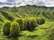 Новая Зеландия, Северный остров, регион Манавату-Вангануи, ландшафт — стоковое фото