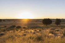 Botswana, Parc transfrontalier Kgalagadi, Kalahari, paysage au lever du soleil — Photo de stock