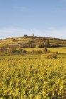 Alemania, Renania-Palatinado, Pfalz, Ruta del Vino Alemán, Flaggenturm en la colina Fuchsmantel y viñedos en colores otoñales - foto de stock