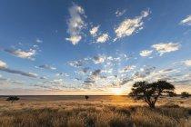 Африка, Ботсвана, Кгалагади, заповедник Мабуасехубе, Мабуасехубе Пан на восходе солнца — стоковое фото