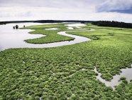 États-Unis, Virginie, Marais de la rivière Chickahominy — Photo de stock