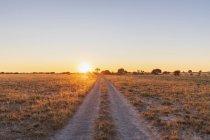 Botswana, Kalahari, Reserva Central de Caza Kalahari, pista al amanecer - foto de stock