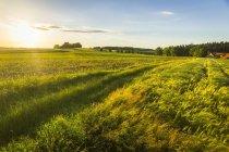Austria, Innviertel, field at the sunrise — Stock Photo
