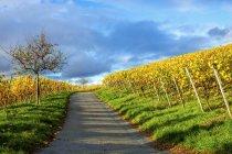 Germany, Hesse, Hessische Bergstrasse between Bensheim and Heppenheim in autumn — Stock Photo