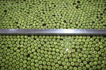 Green apples in factory being washed — Stock Photo