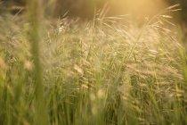 Трава на полі в сонячному світлі — стокове фото
