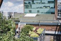 Германия, Дуйсбург, Сад на крыше — стоковое фото