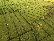 Индонезия, Бали, Вид с воздуха на рисовые поля — стоковое фото