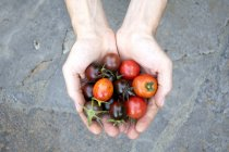 Man's hands holding various organic tomatoes — Stockfoto