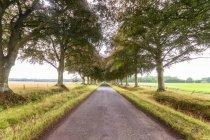 Royaume-Uni, East Lothian, route vide, bordée d'arbres — Photo de stock