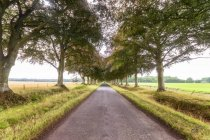 United KIngdom, East Lothian, empty road, tree lined — Stock Photo