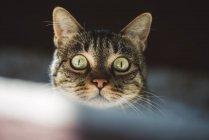 Портрет кошки с зелеными глазами — стоковое фото