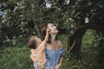Мать держит ребенка в саду, смотрит на яблони — стоковое фото