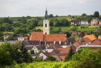 Austria, Baja Austria, Waldviertel, Wachau, Langenlois, Iglesia parroquial, viñedo - foto de stock