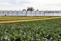 Germany, Constance district, Reichenau Island, greenhouses and vegetable cultivation — Stock Photo