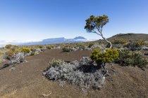 Réunion, Réunion Nationalpark, piton de la fournaise, route du volcan, plaine des sables — Stockfoto