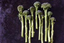 Vue du dessus du brocoli germant — Photo de stock