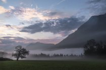 Austria, Ausseer Land, Paisaje en la niebla de la mañana - foto de stock