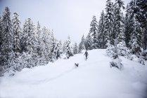 Autriche, Altenmarkt-Zauchensee, jeune femme avec chien en randonnée en raquettes dans la forêt d'hiver — Photo de stock