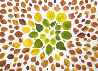Hojas de otoño sobre fondo blanco - foto de stock