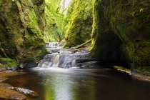 Great Britain, Scotland, Trossachs National Park, Finnich Glen canyon, The Devil's Pulpit, River Carnock Burn — Stock Photo