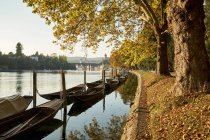 Switzerland, Canton of Schaffhausen, Schaffhausen, Rhine river and traditional Weidlings in autumn — Stock Photo