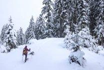 Autriche, Altenmarkt-Zauchensee, jeune femme avec chien en randonnée à ski dans la forêt d'hiver — Photo de stock