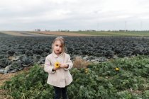 Portrait of a girl standing at a cabbage field holding a flower — Stock Photo
